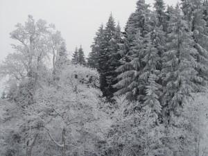 bäumeKÄLTE